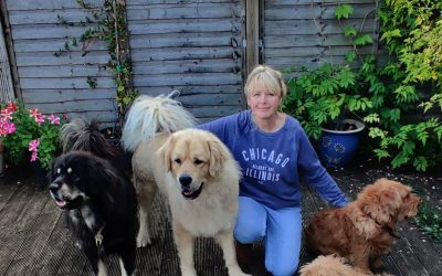 """""""Highly recommend the CIDBT to anyone either thinking about a career in canine behaviour and/or training"""" – Pamela Hindes"""